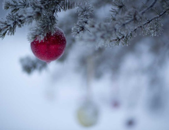 Christmas decoration on a snowy tree