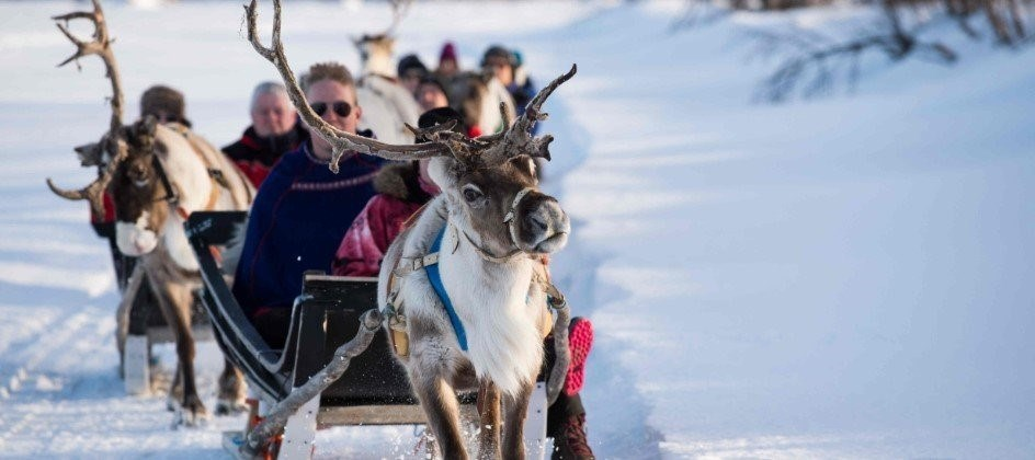 Yes Reindeer Sleigh Rides Are Real Transun Arctic Circle Holidays