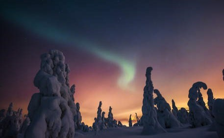 snow covered trees in the Arctic wilderness of Finland